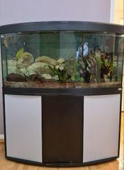 Aquarium 260l