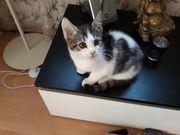 Kitten Kätzchen sucht