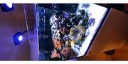 Meerwasseraquarium Auflösungen