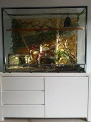 Terrarium mit Unterschrank inkl Einrichtung