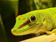 Verkaufe Terrarium mit Gecko