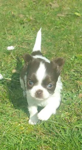 Prinzessin sucht bald ein neues: Kleinanzeigen aus Bretten Diedelsheim - Rubrik Hunde