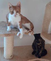 Ginger Caramella Traumpaar sucht Traumfamilie