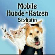 Mobiler hundefriseur
