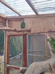 Gebe Papageien und Kakadus ein