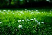 Garten Grundstück in Handschuhsheim gesucht