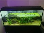 180 Liter Aquarium