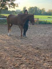 Liebevolles Pferdemädchen sucht ein Wegbegleiter