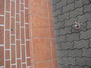Funkantenne Kathrein BOS Funkgeräte 2m