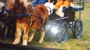 Pferdekutsche für Ponys oder Mini