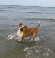 Antikdogge mal deutsche dogge rüde