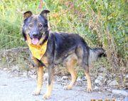 BLERO Schäferhund Mischling - liebenswert und