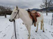 Reitbeteiligung an liebem Pferd inzwischen