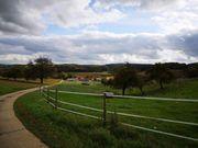 paddock und pferdeboxen