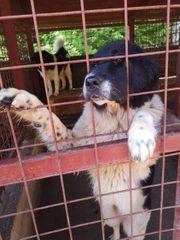 Tierschutz Carla träumt von einem