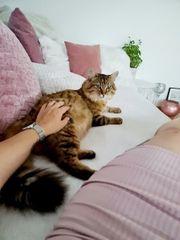 Liebevolle Katzenbetreuung Tiersitter Betreuung