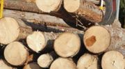 Weichholz zu verkaufen