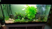 112 Liter Aquarium mit Besatz