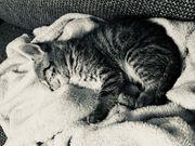 Katzenbaby weiblich sucht neues zu