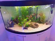 Aquarium Komplett 3 Filter mit