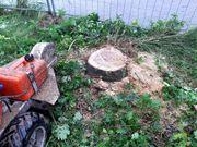 Baumstumpf fräsen