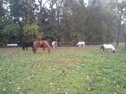 Offenstallplatz für Pony zu vermieten