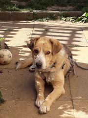 Dino Beagle-Mix sucht Familie