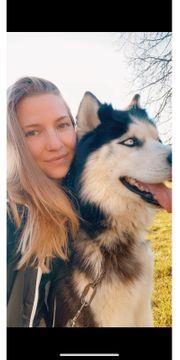 Gemütliche Spaziergänge für Hunde Hundesitting