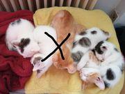 4 von 6 süßen Kitten
