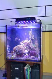 Meerwasser Aquarium komplett mit Besatz
