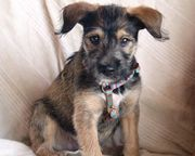 Tierschutzhund - Jack Daniels -