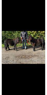 Pony Liebhaber aufgepasst