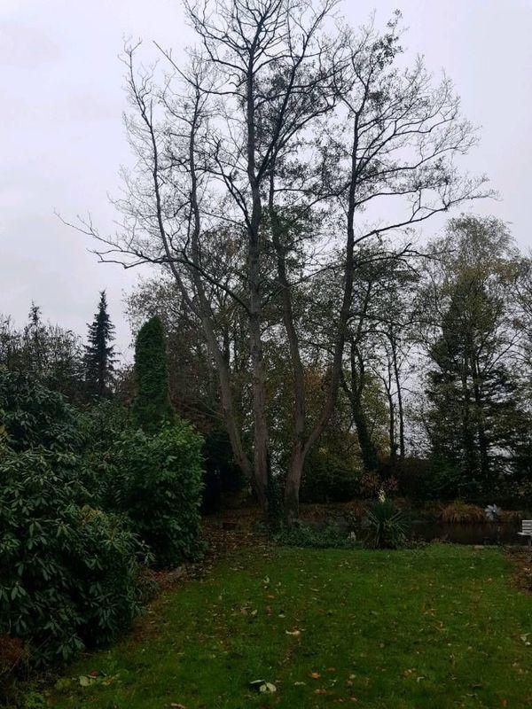 Kostenlos Brennholz Erle in 47906