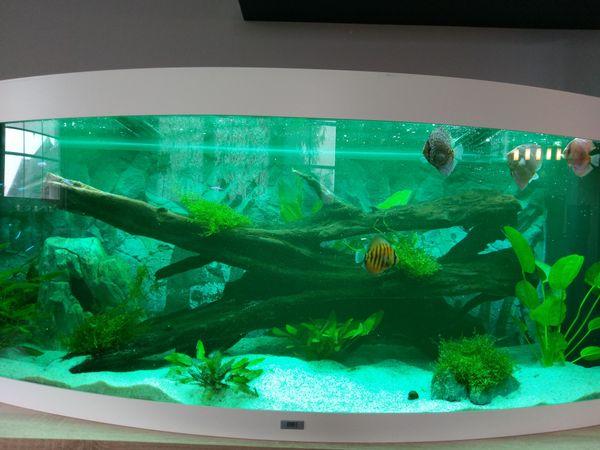 450l Aquarium kaufen - 450l Aquarium verkaufen - dhd24.com