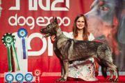 Osteuropäischer Schäferhund (VEO) -