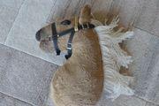 Neu Hobby Horse Steckenpferd Hobby