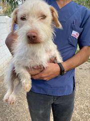 Tierschutzhund Tommy ca 1 Jahr
