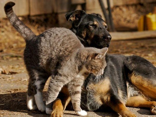 Deutschlandweit Pflegestellen für Hunde und