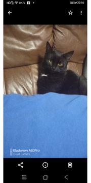 Katze sucht Kater zum Decken