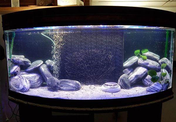 wundersch nes aquarium 180 liter in neulingen fische. Black Bedroom Furniture Sets. Home Design Ideas