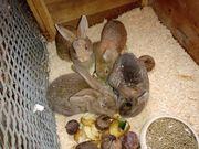 süße Kaninchenbabys