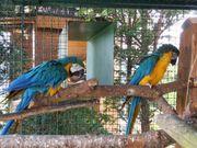 Nehme Papageien und Sittiche auf