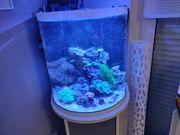 Meerwasser Aquarium 60L komplett