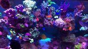 Lebendgestein Meerwasser