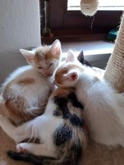 2 rot weisse kater