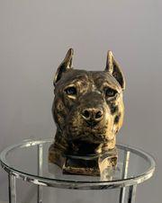 Der Kopf einer Bulldogge Bullterrier