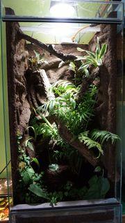 Regenwald-Terrarium komplett