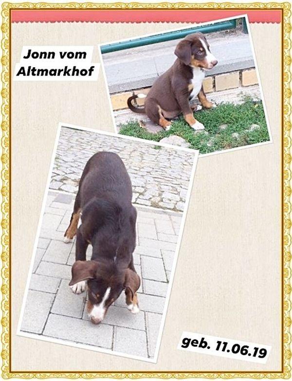 Appenzeller Sennenhund Welpen 12 Wochen M Stammbaum Und Eu
