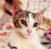 Verschmuster Katzenbub Nils möchte Dein