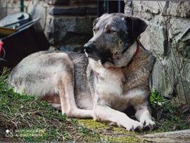 lieber kastrierter Seramis in NRW: Kleinanzeigen aus Bergneustadt - Rubrik Hunde